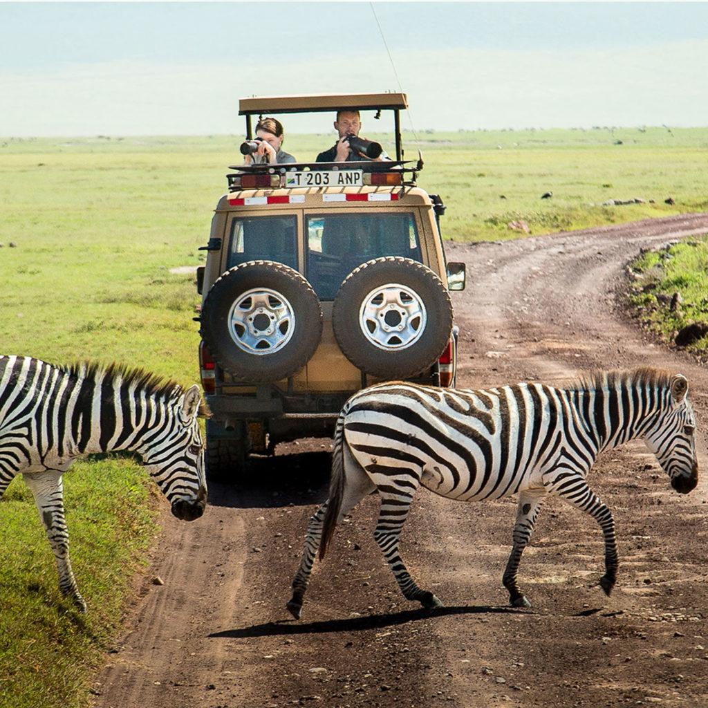Gibb's Farm - Watching zebra on safari in the Ngorongoro Crater