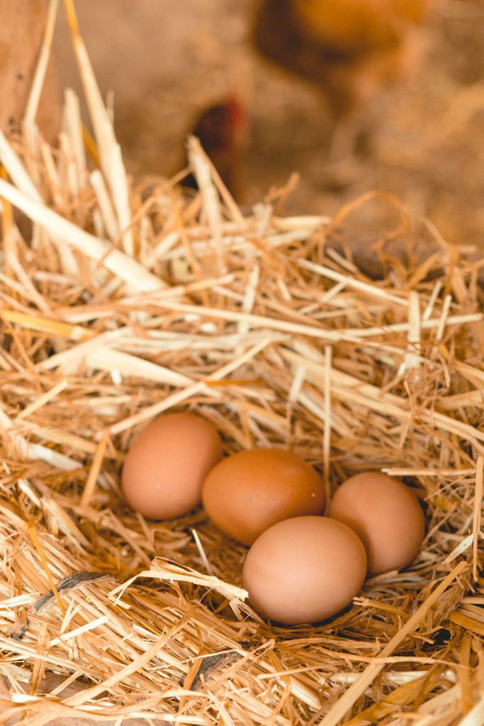 Earn your keep and your breakfast by collecting eggs