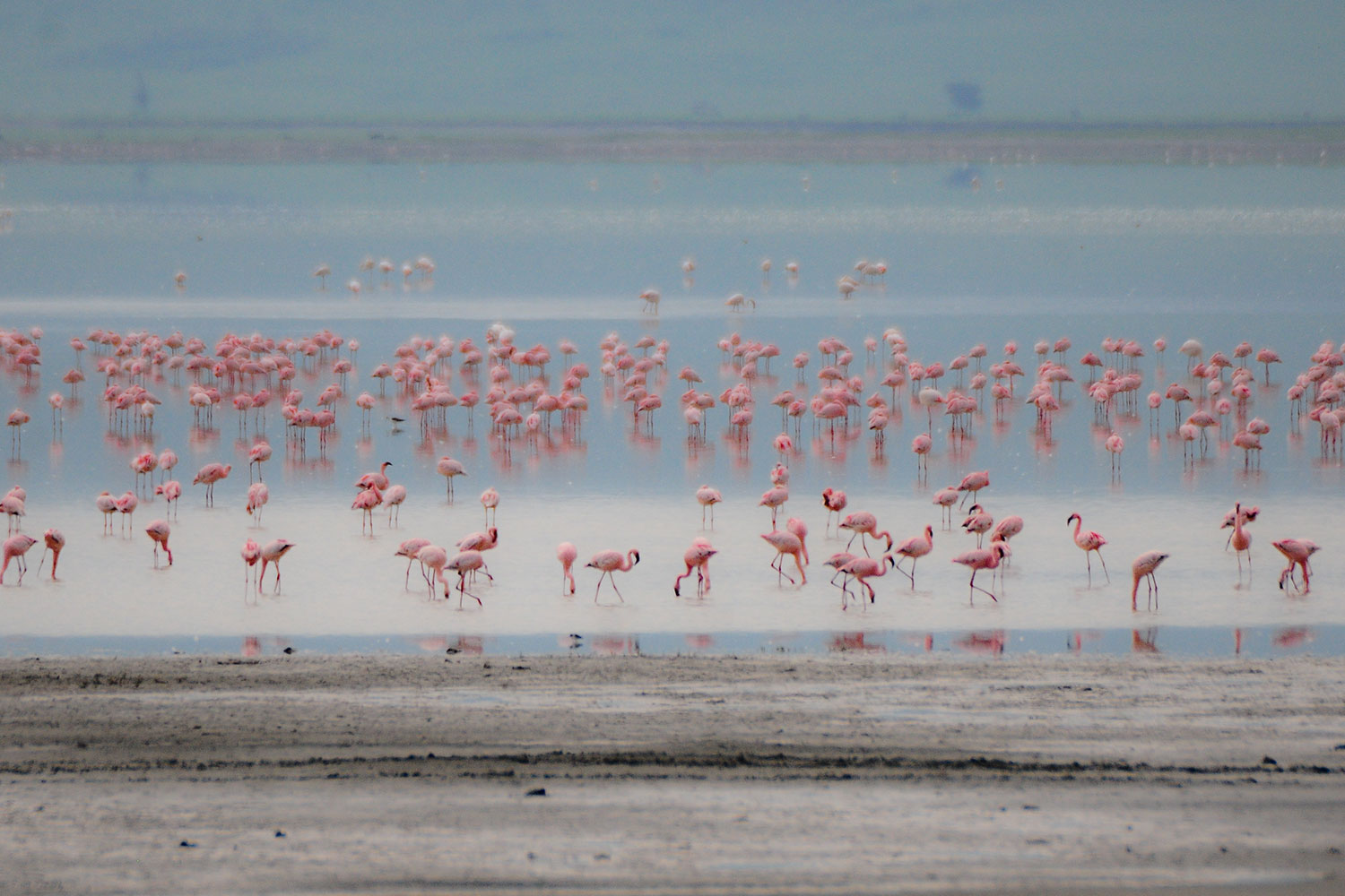 Tanzania is truly a bird watcher's paradise; over 1000 bird species have been recorded from water birds, forest birds, savannah birds to seabirds.