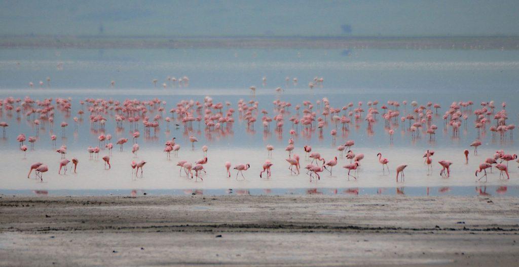 Gibb's Farm - Flamingoes at the Ngorongoro Crater