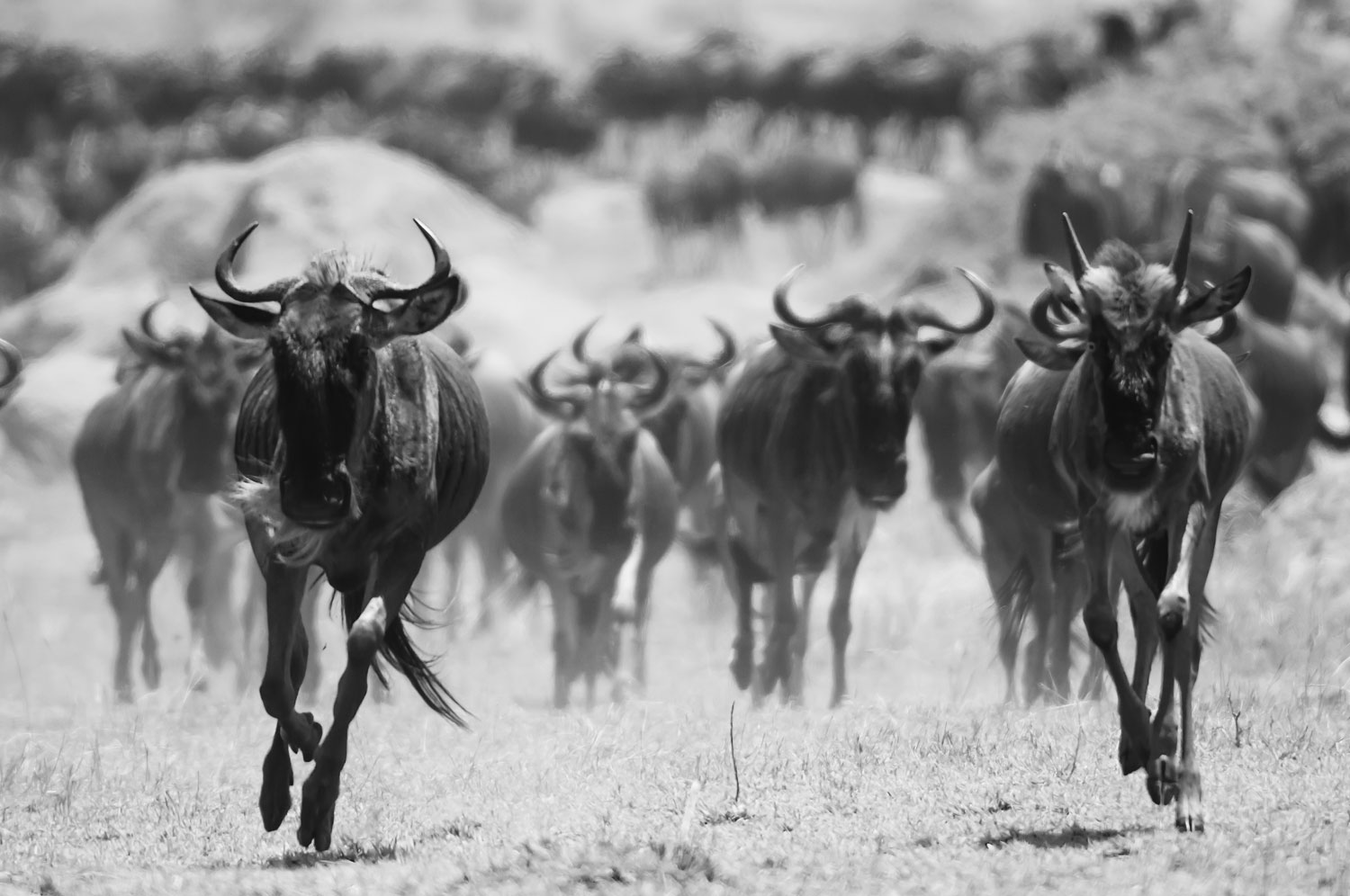 A front-row seat to the great migration in the Northern Serengeti