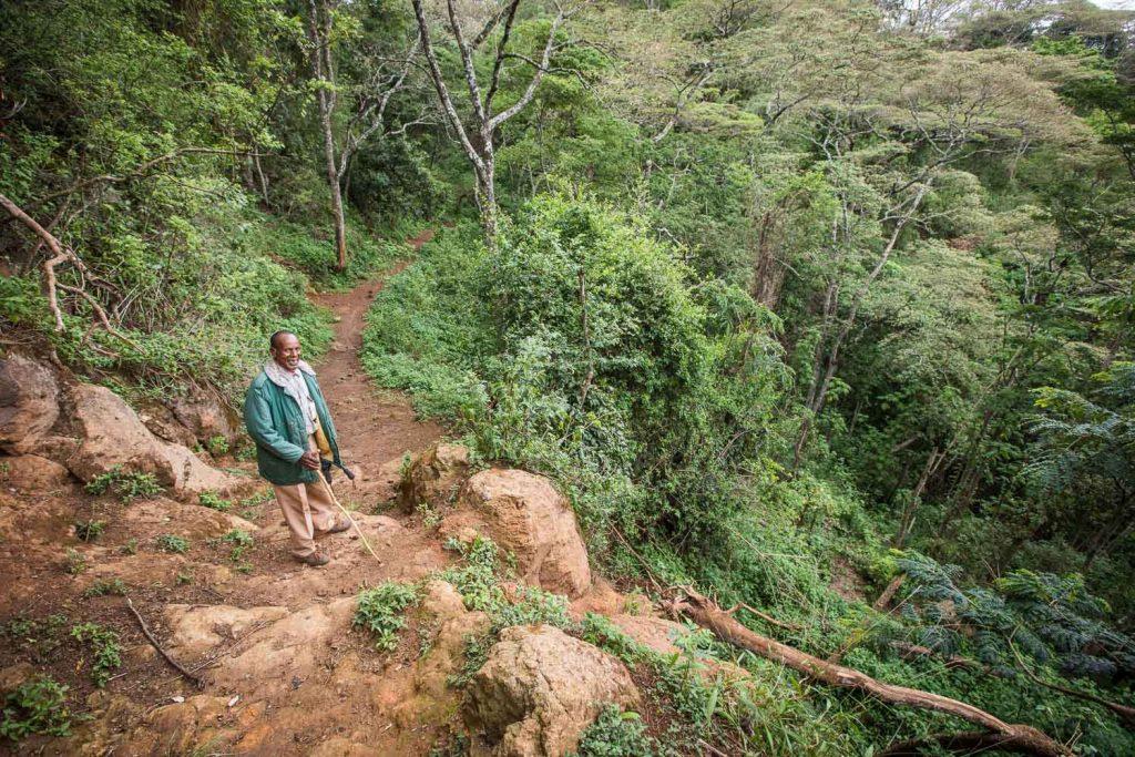 Gibb's Farm - Slow Safari Walks