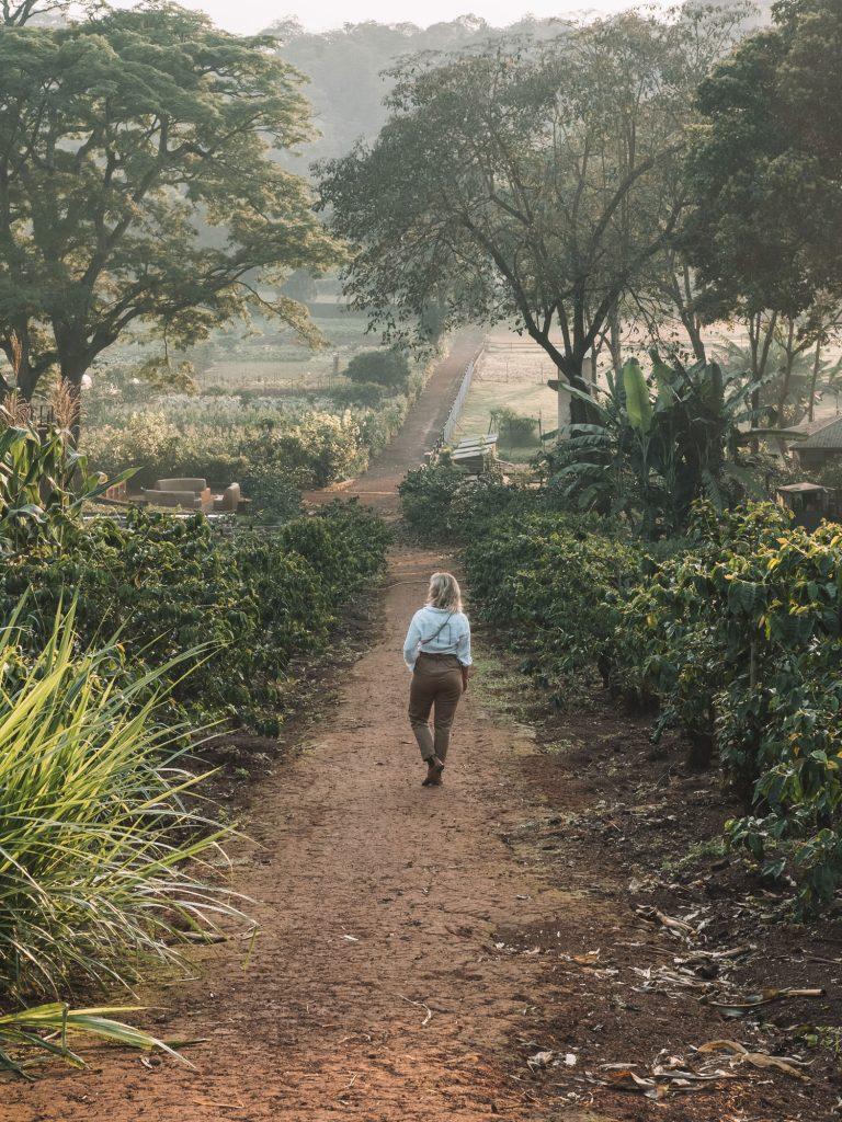 Gibb's Farm - Slow Safari