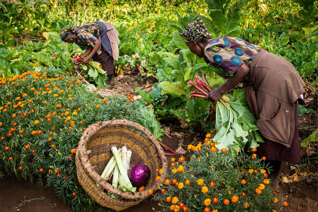 Gibb's Farm - Sustainability projects in Tanzania